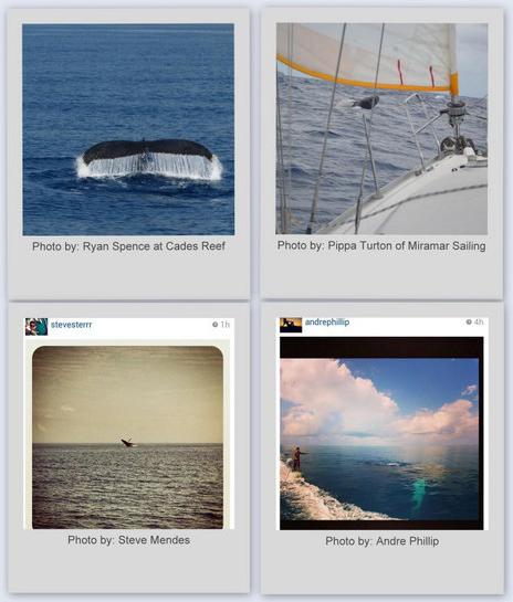 whalewatchingantigua